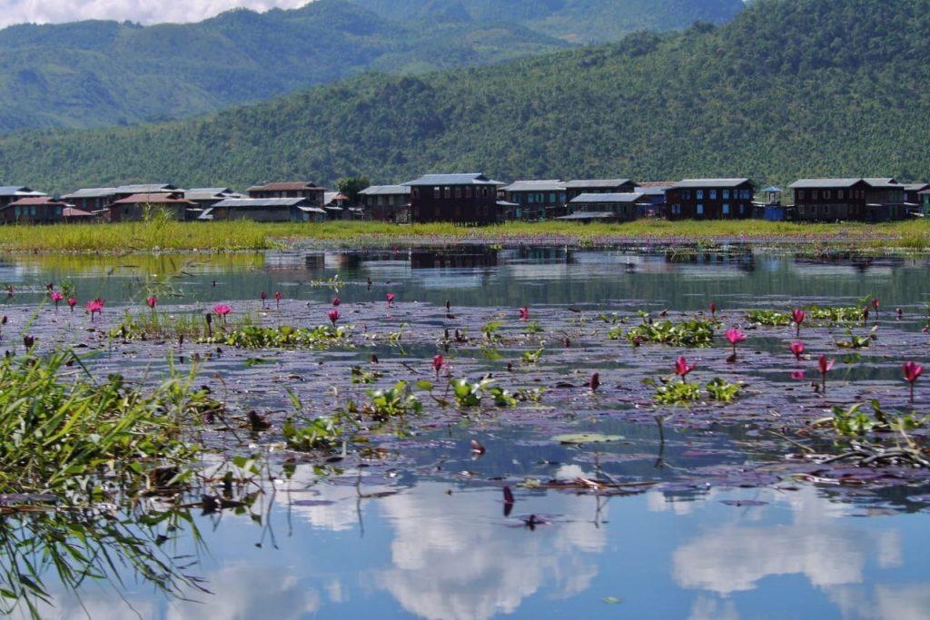 Inle Lake Lotus
