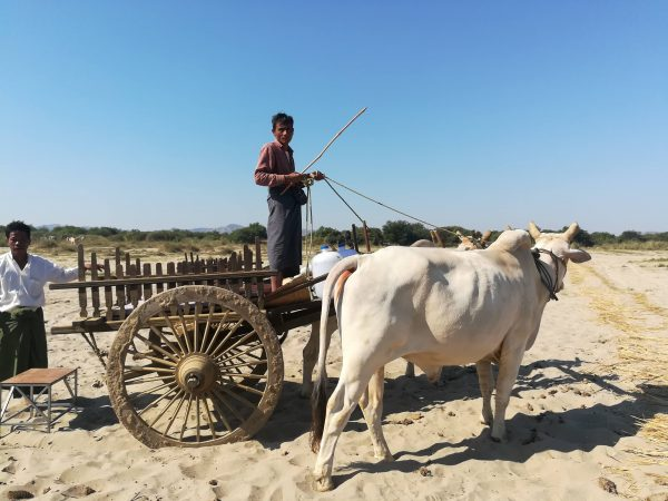 Bagan Rural Village Tour