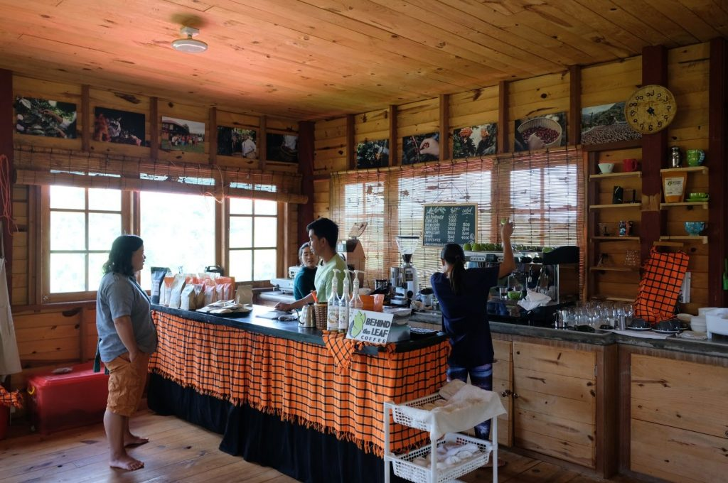 Coffee Plantation Myanmar